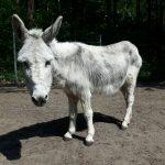 donkey sanctuary ezelopvang