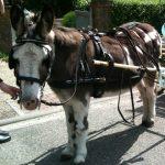 ezelopvang donkey