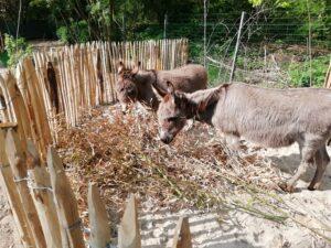 Janneke en Bella in hun eigen Donkey Paradise