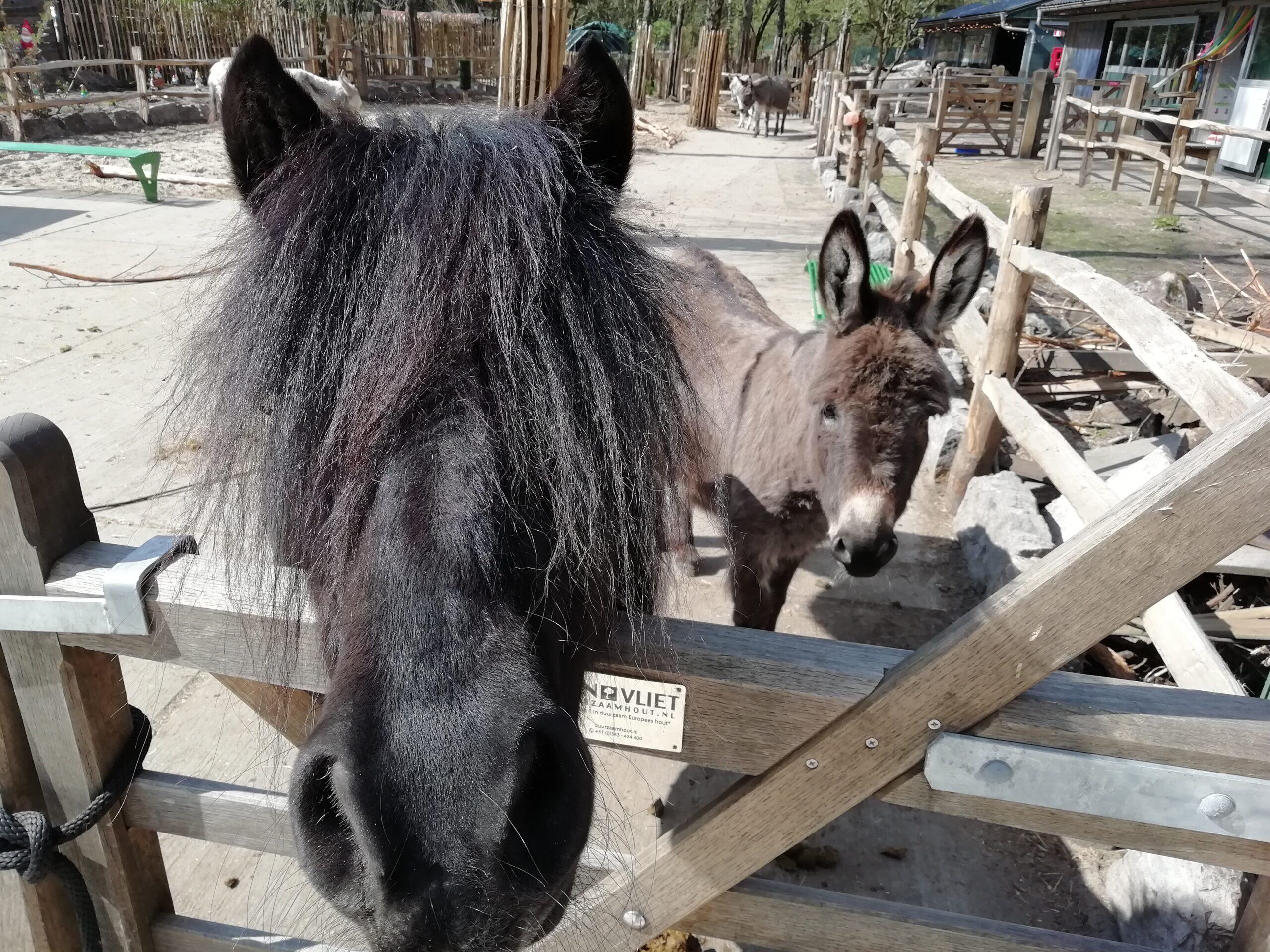Johnny de pony met fan Rusty