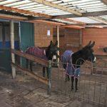 Mannis en tula ezels opvang rusthuis