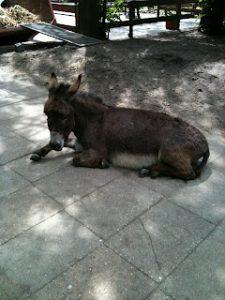 Maud Ezel Donkey Shelter