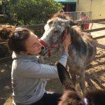 Echte liefde tussen mens en ezel... tijdens de Open Dag