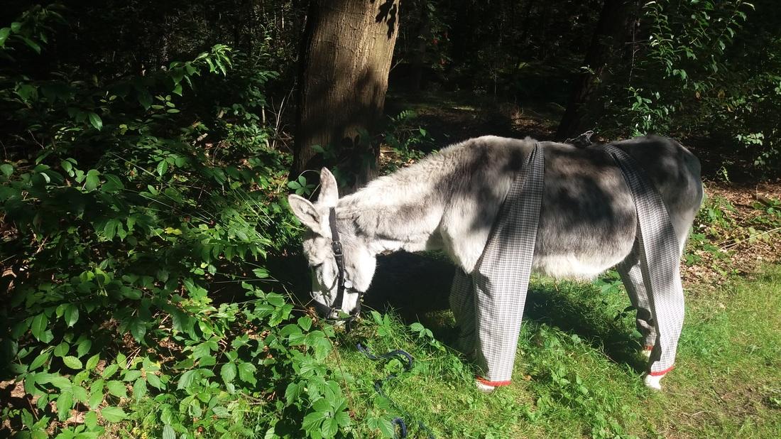 Ezel fiona met ezelbroek tegen de vliegen