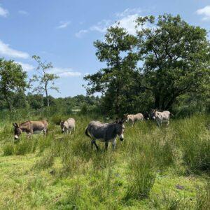 Onze ezels op hun vakantieadres