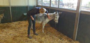 Emma krijgt haar jaarlijkse inenting van de dierenarts