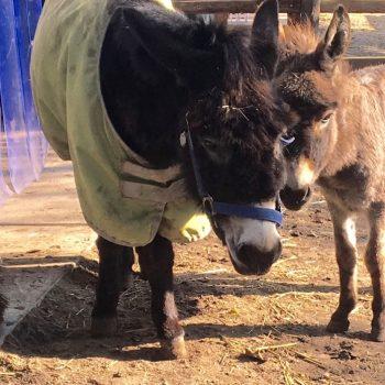 Ezel Froukje zoekt troost bij Nimbus na het overlijden van haar moeder petunia