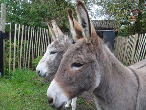 Gwinny en Luna nieuw opgenomen in de opvang
