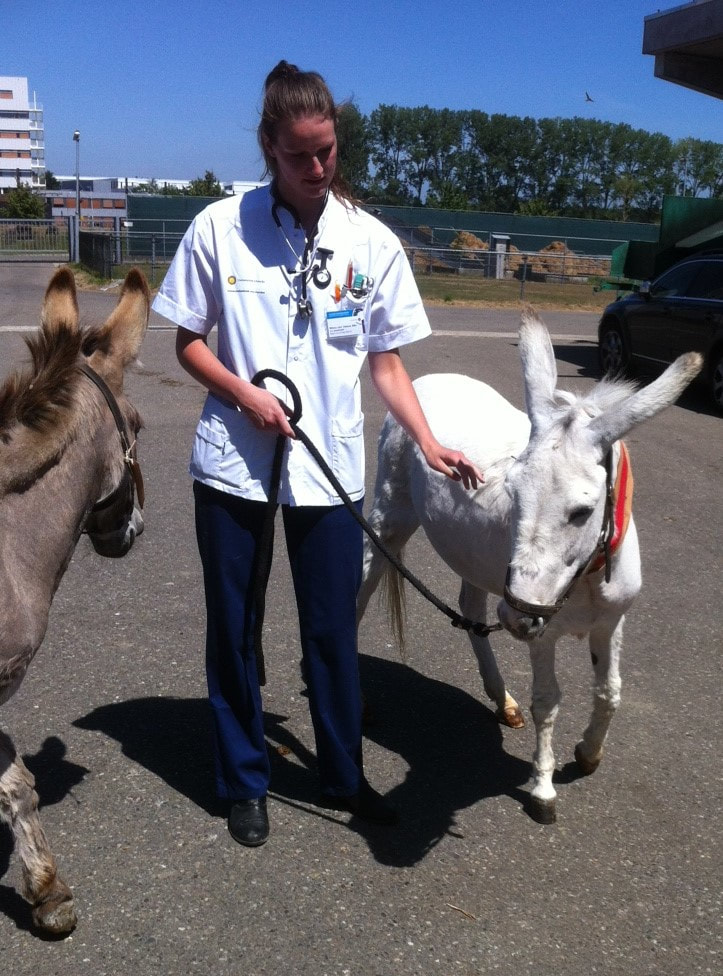 Zieke ezels verzorgen Jewel en Luna