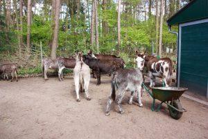 De ezels en vrijwilligers zijn dankbaar voor al die lieve mensen die hielpen met de nieuwe stallen