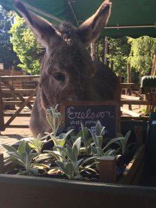 Donkey Sorbo Sanctuary Ezel opvang Open Dag