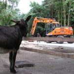 start van de bouw van de nieuwe ezelstallen. Merrie Trijntje houdt toezicht