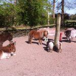 Voorjaar op een pleegadres van de ezelscocieteit in ruinen